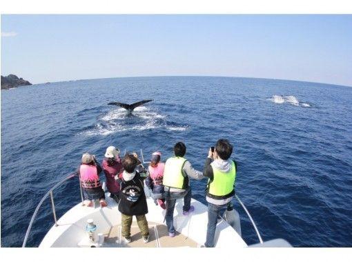 【鹿児島・奄美】遭遇率No.1!クジラを見に行こう!ベテランガイド付きのホエールウォッチングツアー!