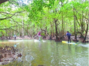 [沖繩西表島]紅樹林SUP和淋浴徒步旅行(瀑布遊路線)