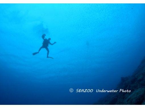 【高知・宿毛】初心者・未経験者歓迎!柏島の豊潤な海に潜る体験ダイビング