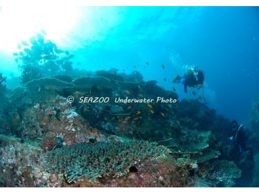 【高知・宿毛】黒潮の恵み柏島の海に潜る!ライセンスをお持ちの方限定ファンダイビング(4ボート)