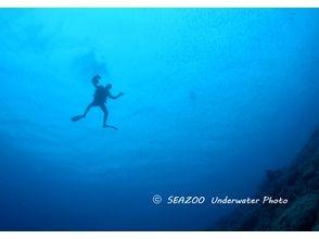 【高知・宿毛】柏島の海を堪能!ライセンスをお持ちの方限定ファンダイビング(ナイトダイブ)の画像