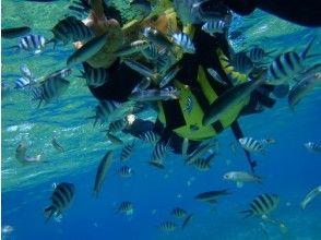 【沖縄】沖縄でお手軽シュノーケル、サンゴの花畑へ!【スノーケリング】