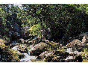 【鹿児島・屋久島】国内で初めて「森のエコツアー」白谷雲水峡 ・1日トレッキングコースの画像