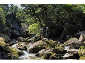 "[Kagoshima Yakushima] for the first time ""forest of eco-tour"" in domestic Shiratani Unsuikyo-day trekking course"
