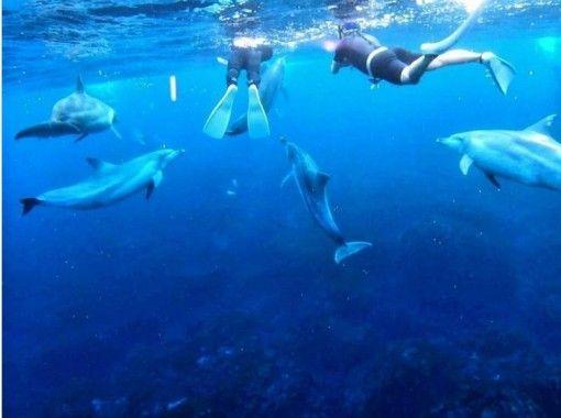 【東京都・練馬区】イルカと一緒に泳ぎたい方へ!ドルフィンスイムコース!