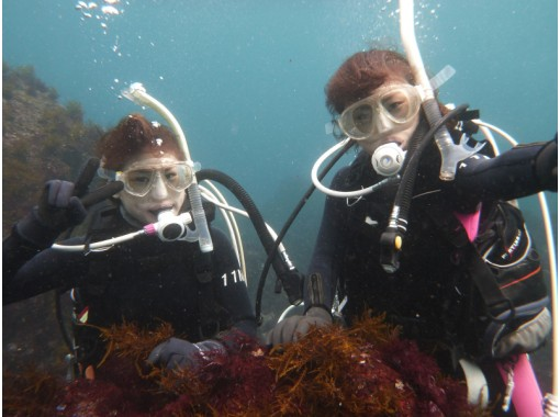 Diving Service P-FISH(ピーフィッシュ)