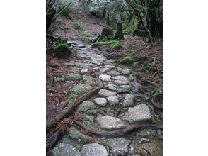 【鹿児島・屋久島】白谷雲水峡原生林トレッキングツアー(1日コース)の画像