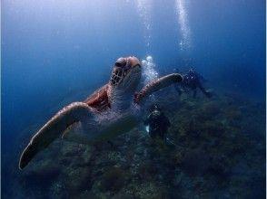 【屋久島 体験ダイビング 】1ダイブロングコース【午前・午後】の画像