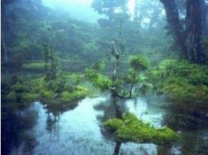 【鹿児島・屋久島】宮之浦岳日帰りパノラマトレッキングツアー(1日コース)の画像