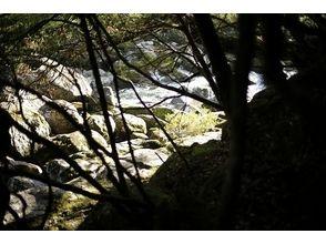 【世界遺産屋久島 日帰りトレッキング】大和杉 エコツアーの画像