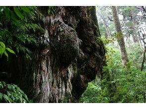 【世界遺産屋久島 日帰りトレッキング】天文の森  エコツアーの画像