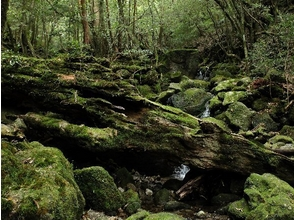 【世界遺産屋久島 日帰りトレッキング】フォトトレッキング エコツアー B白谷雲水峡・原生林歩道コースの画像