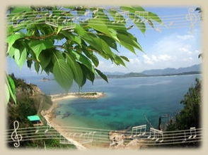 【山口/下関】人気ポイント室津の海でファンダイビングを楽しむ!【ビーチ/ボート】の画像