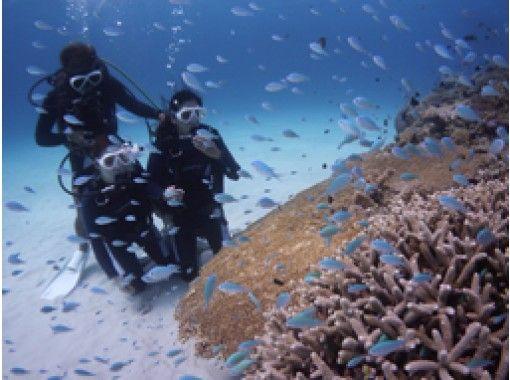 [โอกินาว่า / เกาะโทคาชิกิ] ★มันก็โอเคแม้ว่าคุณจะไม่สามารถว่ายน้ำเป็นครั้งแรก★ประสบการณ์ ดำน้ำの紹介画像