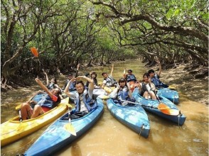 [Kagoshima-Amami Oshima] image of mangrove canoe touring experience (120 minutes course)