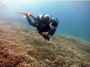 【沖縄・石垣島】経験者のみ!世界有数の美しい海を満喫しよう!ファンダイビングの画像