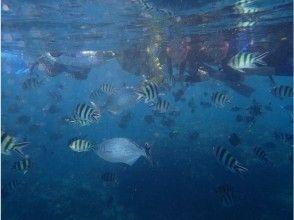 [Okinawa Onna] snorkel charter course