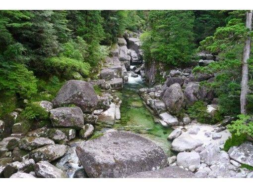 Forest Walk Yakushima