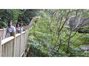 沖縄北部・国頭【沖縄ジャングルトレッキング】比地大滝トレッキングの画像