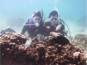 沖縄本島南部・糸満 自然海岸利用一組貸切お手軽体験ダイビングの画像