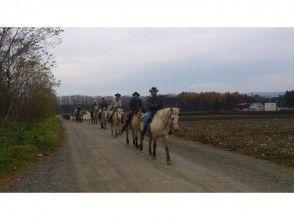 【北海道 函館 乗馬】手軽にホーストレッキング外乗 お散歩コース(30分)の画像