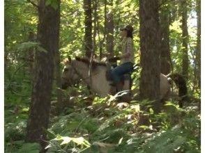 【北海道 函館 乗馬】たっぷり乗馬を楽しめる ホーストレッキング外乗 林間コース(90分)