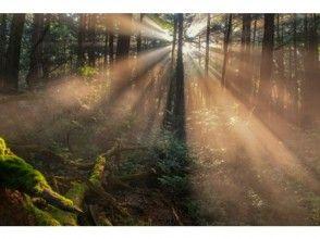 [富士青木原樹海! ]七月和八月只有有限!非常漂亮的景色!林導走普照的光