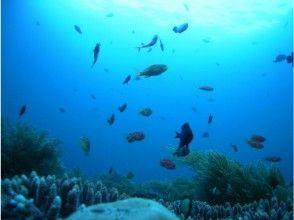 【四国・徳島】Cカード取得者限定!徳島の豊かな海を楽しむファンボートダイビング(2ボート)の画像
