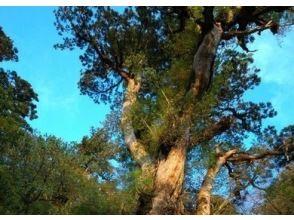 【鹿児島・屋久島】縄文杉登山~迫力の縄文杉と大自然を体感できる膨大コース~健脚者向き(早朝発・1日)