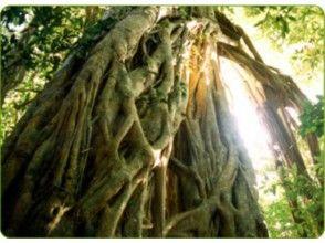 【2名様以上!1日・西部林道ツアー】生きている自然を満喫できる西部林道コース!の画像