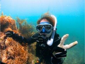 【神奈川・横浜】初挑戦歓迎!アクシーで体験ダイビングを楽しむ(日帰り)の画像