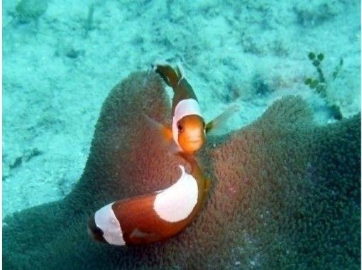 【沖縄・西表島】島に着いたらすぐ潜りたい!到着日ファンダイビング(1ダイブ)