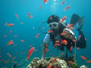 """[沖縄-石垣島即使是沒有經驗的人·初學者也沒事! """"石垣島在海的經驗深潛(半天課程)"""