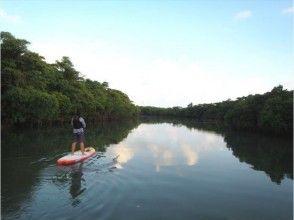 【沖縄・石垣島】人気急上昇!秘境のマングローブ林の群生でSUP体験!の画像
