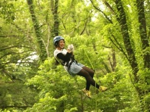 【Hyogo · Tajima】 Up to 15 m! Let's climb up the tree with a rope! Image of treeing (half day course)
