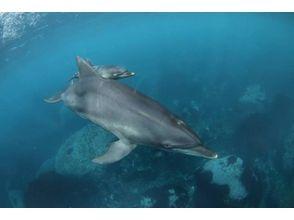 【東京・利島】利島でイルカと泳ぐ、ドルフィンスイムを楽しもう!の画像