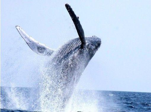 【沖縄・本部】冬季限定!お得なセットプラン!本部港発のホエールウォッチング&体験ダイビング