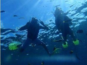 【沖縄・本部】初心者安心!体験ダイビング(ビーチエントリー)の画像