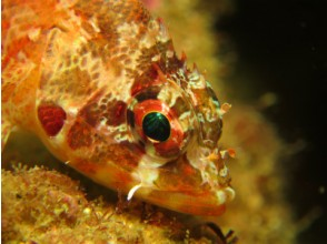 [Okayama] 2 dive course - with lunch] to experience diving longer play in the southern Shikoku