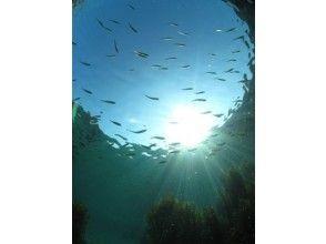 【岡山】豊かな日本海を堪能!体験ダイビング2ダイブコース【ランチ付き】の画像