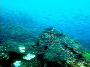 [Kumamoto Amakusa] colorful fish and coral welcome! ? Snorkel tour (half day plan)