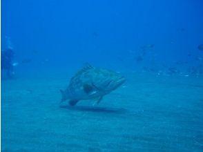 【茨城・つくば】初心者歓迎!1日体験ダイビング【海での体験】の画像