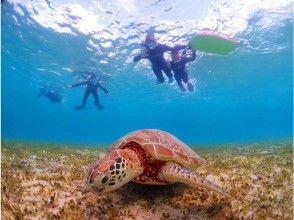 【鹿児島・奄美大島】憧れのウミガメに会いに行こう!シュノーケル体験(ウミガメ探索コース)