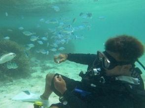 [沖繩石垣]享受白色的沙灘和蔚藍的大海!島和體驗潛水課程幻影