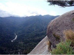【鹿児島・屋久島】白谷雲水峡Bコース(早朝出発)の画像