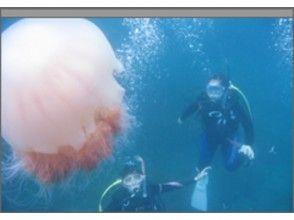 【愛知・名古屋発】手軽に参加!体験ダイビングコース(越前海岸)の画像