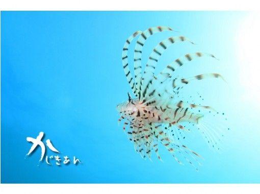 【愛知・名古屋発】4日間でライセンス取得!オープンウォーター(OWD)取得コース