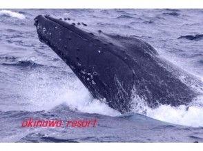 【沖縄・座間味】ホエールウォッチング(2時間コース)の画像