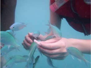 [Kagoshima-Amami Oshima] children and also fun for adults! Image of tropical fish feeding snorkeling tour of