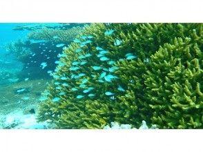 【バラス島・鳩間島】☆往復乗船券込☆幻の島とサンゴ礁でシュノーケルを1日たっぷり楽しみませんか?